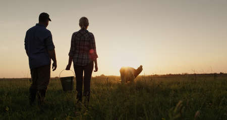 A couple of farmers admire their cow grazing in a meadow at sunset