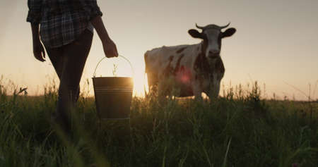 A female farmer with a bucket in her hand stands on a field near her cow. Dairy products from home farm 写真素材