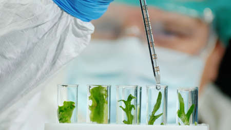 Researcher with protective clothing and glasses conducts experiments with plants 写真素材