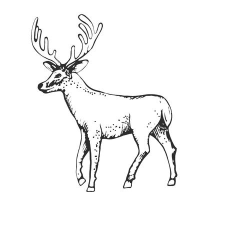 lithograph: Deer engraving style, vintage illustration, hand drawn, sketch
