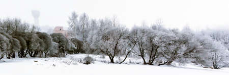 New Year's winter forest, forest in the snow, frost on the trees Stock Photo