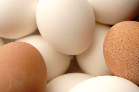 Lots of white and brown chicken eggs. Closeup