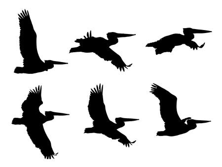 Dalmatian pelican Pelecanus crispus in flight silhouettes set.