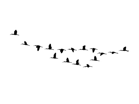 Glossy ibis wedge in flight. Vector silhouette a flock of birds.