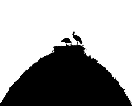 White storks in nest on the roof silhouette.