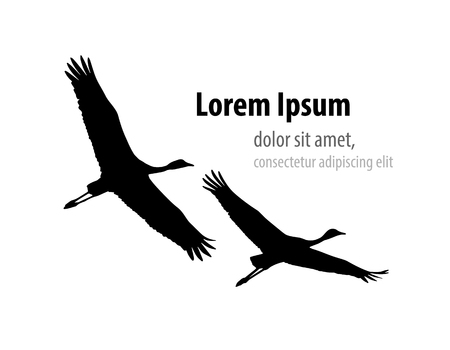 Demoiselle crane in flight silhouette. Template design for banner, t-shirt, cover.