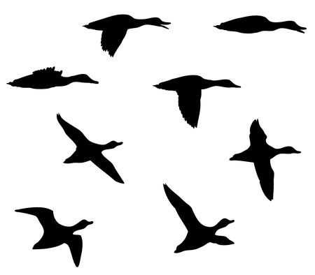 Mallard duck in the flight silhouettes set. 向量圖像