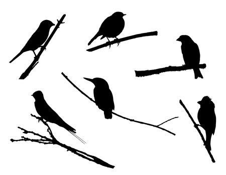 Birds on the branch silhouette set in vector.