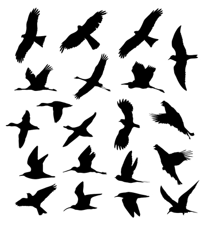 Birds in the flight set silhouettes.