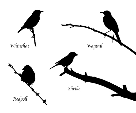 Birds on the branch silhouette