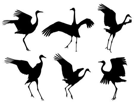 Common Crane in the dance silhouettes set.