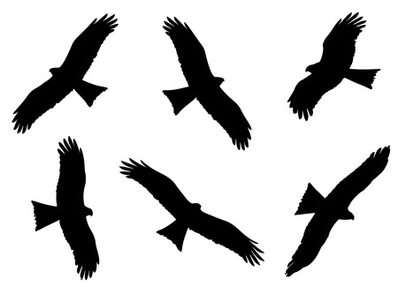 Black Kite in the flight silhouettes set in vector.