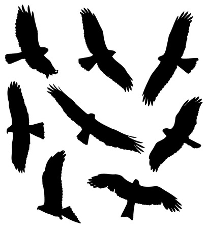 Buse variable dans le jeu de silhouettes de vol.