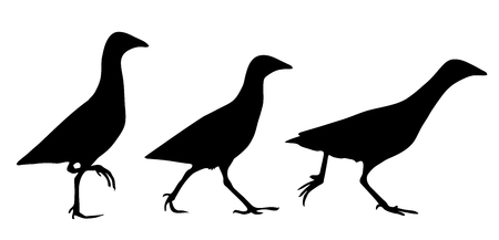 Corn crake silhouette set in vector.