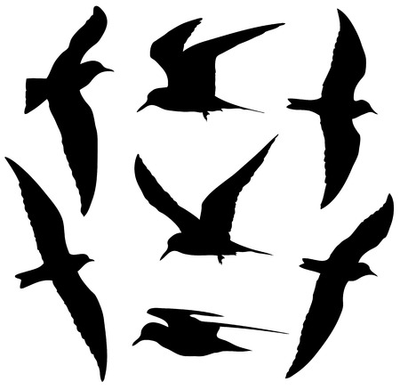 Common Tern in the flight silhouettes set.