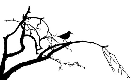 Wood sandpiper on the tree silhouette