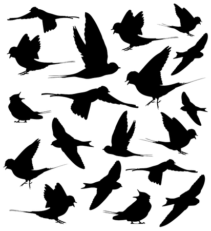 Barn swallow silhouettes set in vector.