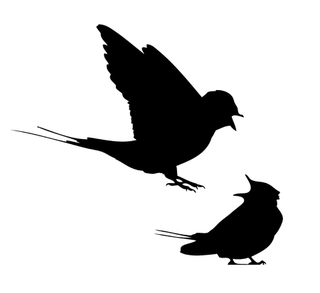 Barn swallow flit and sitting silhouette in vector. Illustration