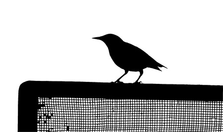 Common Starling on the fence silhouette Illustration