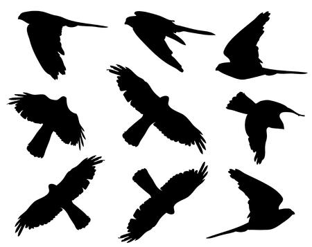 Faucon crécerelle en silhouettes de vol