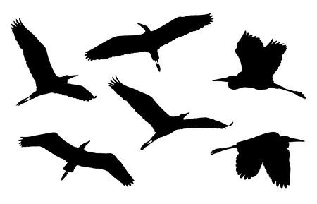 Grey heron in flight silhouettes