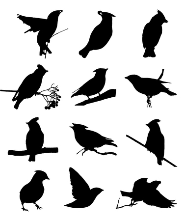 Bohemian waxwing isolated silhouettes set Illustration