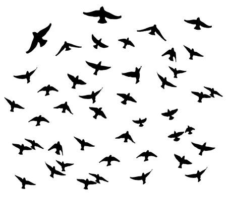 Waxwing bohemio en las siluetas aisladas de vuelo. Ilustración de vector