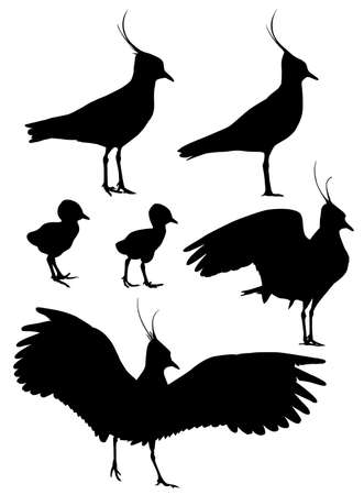 Northern Lapwing with chicks silhouettes set