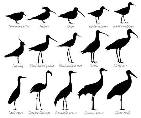 Water birds and birds of fields. Silhouettes vector collection.