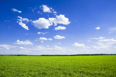 Green field and the blue sky Stock Photo