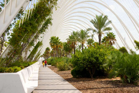 hotbed: Greenhouse LUmbracle (palm trees avenue), Valencia, Spain