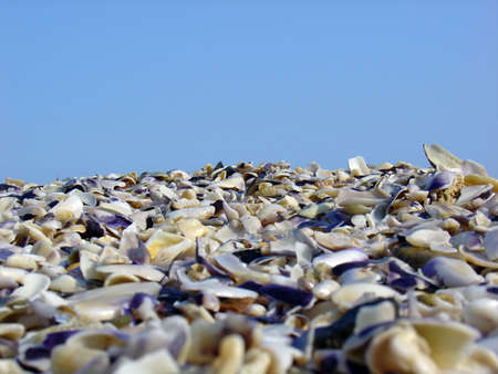 Seashell beach Stock Photo - 5859701