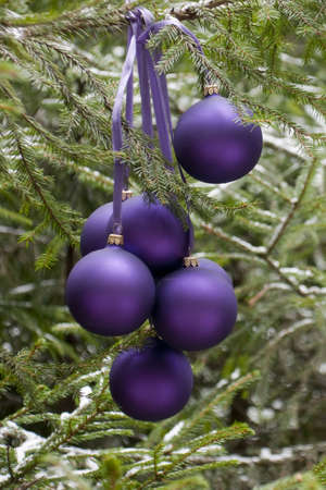 Violet New Years baubles on a fir-tree in wood, december (outdoors)