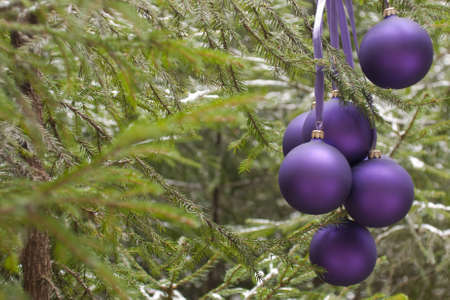 Violet New Years baubles on a fir-tree in wood, december (outdoors)  Stock Photo