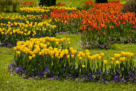 Park of tulips