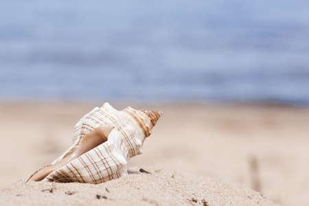 Sea cockleshell on a beach against the sea. (close-up) Stock Photo