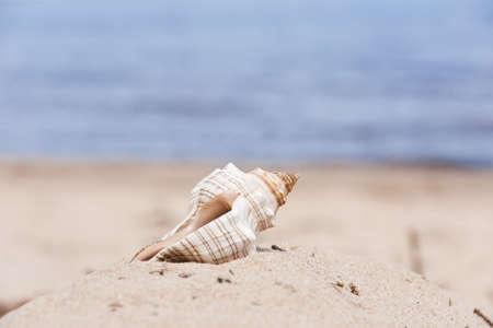 Sea cockleshell on a beach. On a background the dim dark blue sea.