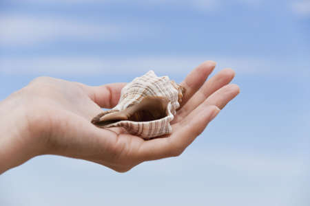 Sea cockleshell on a female hand against the blue sky with clouds Stock Photo