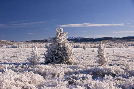 Snow covered fields of Norway. Frozen trees. November. Stock Photo