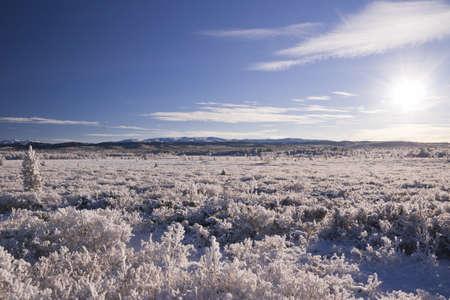 Snow covered fields of Norway. Frozen shrubs. November.