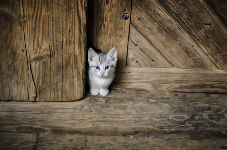 striped small white kitten in doorway  hiding in a hole Standard-Bild