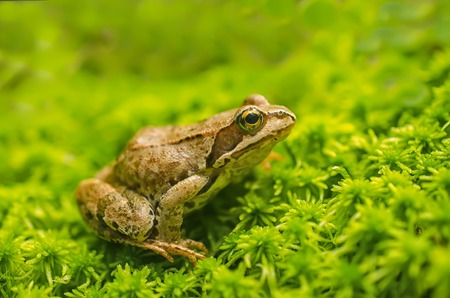 frog green: Frog in the grass