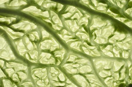 savoy: Savoy cabbage leaves Stock Photo
