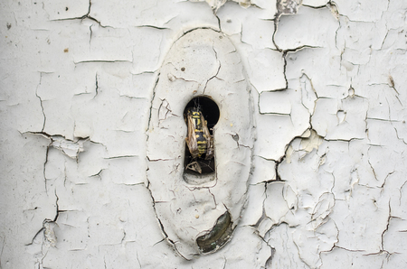 Old keyhole with wasp