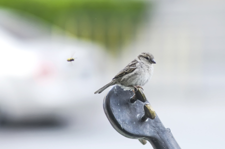 flit: Sparrow on monument, sparrow and fly