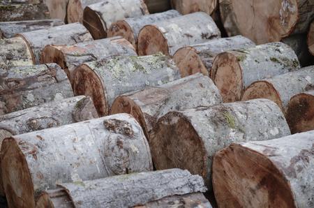 sawn: Freshly cut timber logs, sawn trees