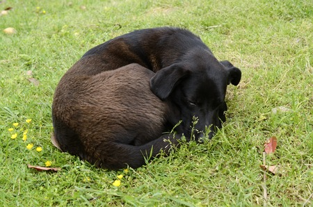 dog curled up and asleep in the green grass
