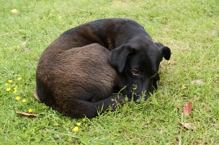 cur: dog curled up and asleep in the green grass