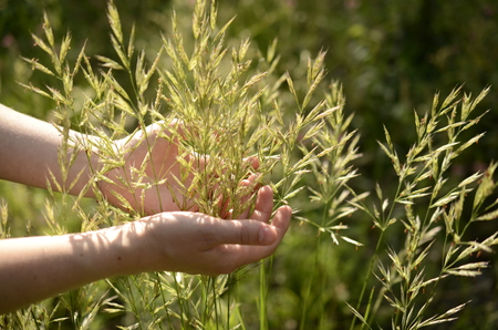 womans: womans hand touching the grass