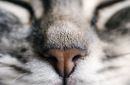 nose close up: Fragment of a cats nose. Close up